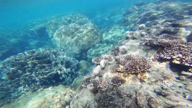 Hòn Đồi Mồi rất thích hợp để lặn biển ngắm san hô