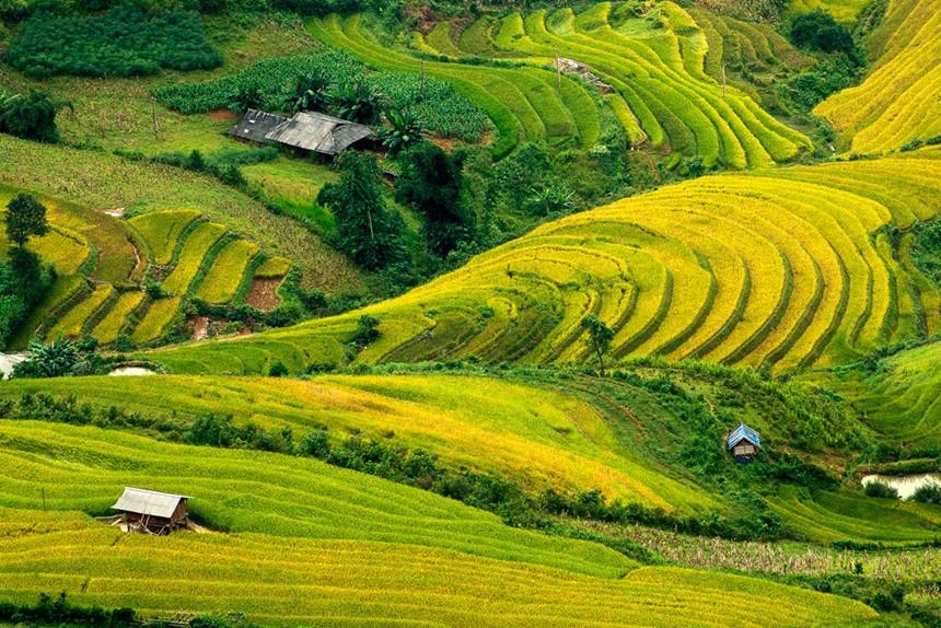 Tháng 9 lên vùng cao ngắm Mù Cang Chải mùa vàng đẹp hút hồn